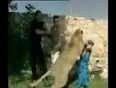 lion-attack-girl-tv-reporter-video